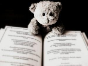 bear-422369_1280